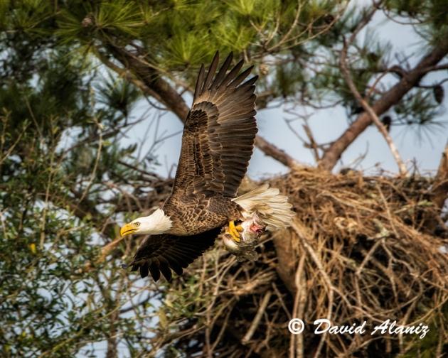 Pearland-Eagles_0204web