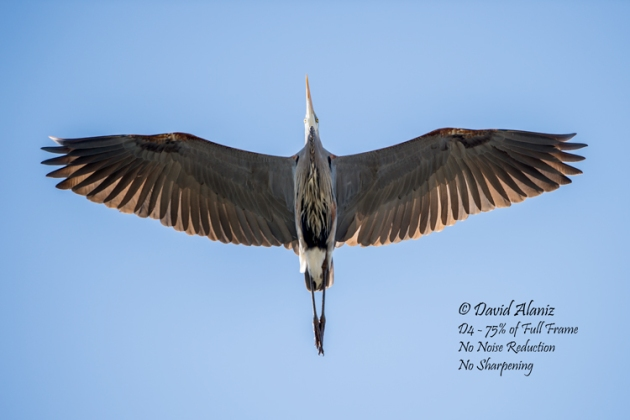 Varner-Bird_20130216_0014web
