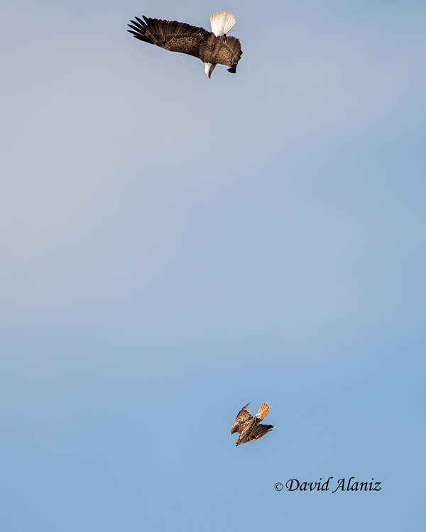 Pearland-Eagles_2013Mar01_0063web