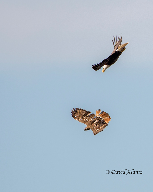 Pearland-Eagles_2013Mar01_0065web