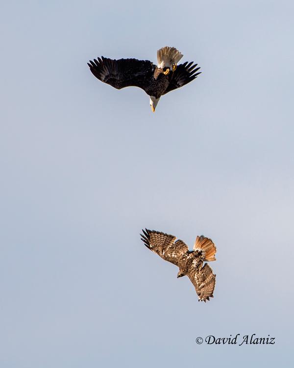 Pearland-Eagles_2013Mar01_0067web