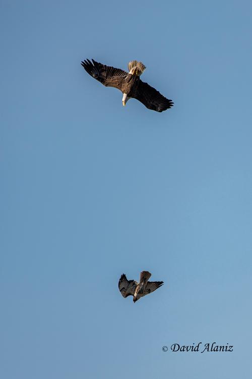 Pearland-Eagles_2013Mar01_0069web