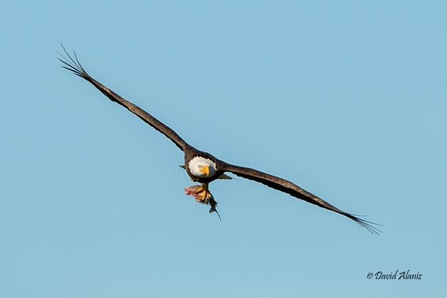 Pearland-Eagles_20140215_0049web