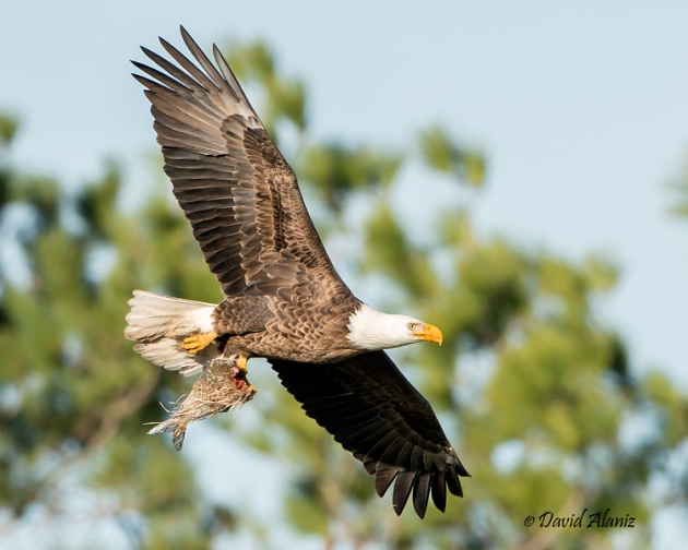 Pearland-Eagles_20140215_0053web