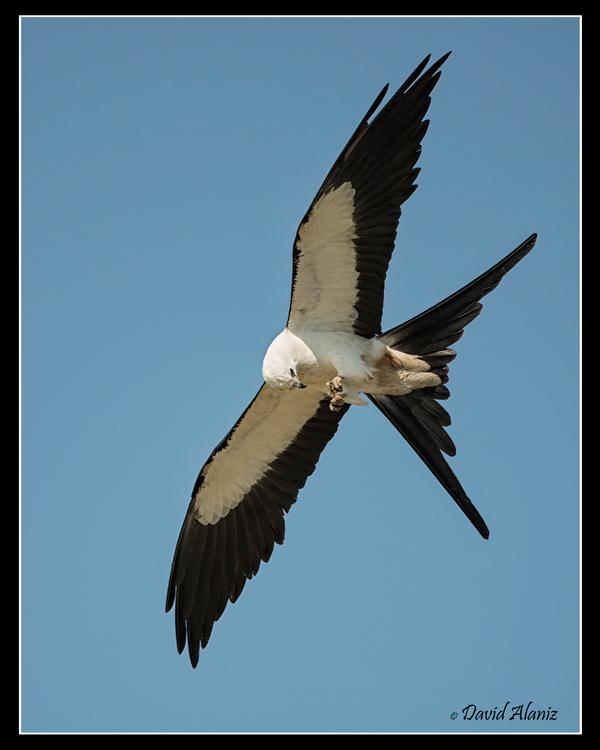 Kites_20140712_0452web