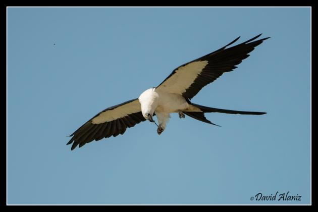 Kites_20140712_0463web