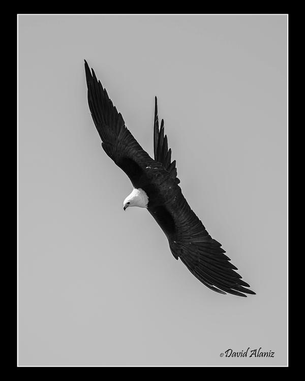 Kites_20140712_0539web