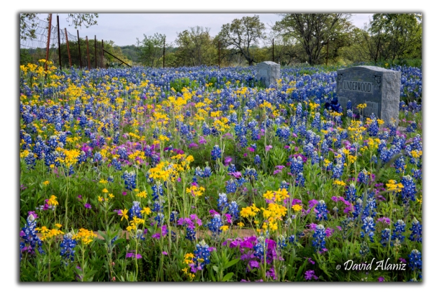 Flowers_20150406_1386web